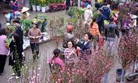 2017丁酉春节临近花卉盆景深受消费者欢迎