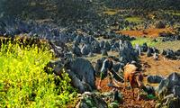 越南政府批准建设同文岩石高原全球地质公园规划