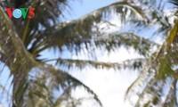 南谒——长沙群岛的椰林