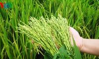 太平省发展农业经济