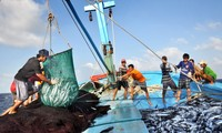 越南农业与农村发展部应对海产品异常死亡现象