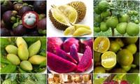 越南南部安全农产和特产食品展示周即将举行