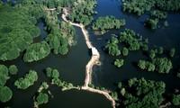 越南湿地约为1200万公顷