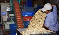 2017年越南对欧盟腰果出口有望达到10亿美元