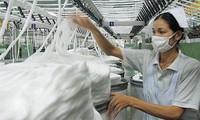 棉花日首次在越南举行