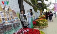 第7次大叻花卉节即将举行