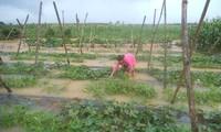 越南中部义安省蔬菜价格上涨