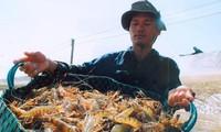 Exportvolumen von Garnelen steigt wieder