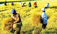 Vietnam will 2015 landwirtschaftliche Produkte im Wert von 32 Milliarden US-Dollar exportieren