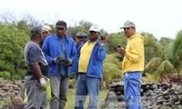 Ermittlungsbehörden beschäftigen sich weiter mit der Begutachtung von Wrackteilen auf La Réunion