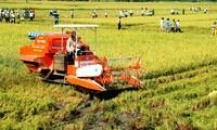 Umstrukturierung der Landwirtschaft in Vietnam für die Weiterentwicklung