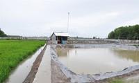 Effizientes und nachhaltiges Produktionsmodell von Reis und Garnelen