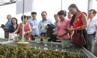 Auslandsvietnamesen setzen sich für die Entwicklung der Wissenswirtschaft in Ho Chi Minh Stadt ein