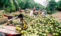 Kokosbäume in Ben Tre
