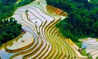 Tạp chí Forbes đưa tin miền Bắc Việt Nam là điểm du lịch rẻ nhất thế giới