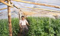 Người Việt trồng rau trên đất Nga