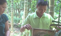 Người nuôi ong dưới tán rừng