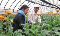 Die Neuorganisation der Ackerflächen in Gemeinden rund um Hanoi