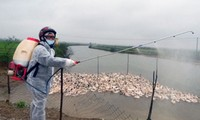 Vorsorge gegen Vogelgrippe-Virus H7N9 in Vietnam