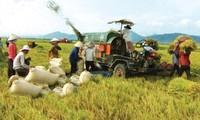 Mechanisierung bei Reisproduktion im Mekong-Delta