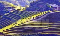 Kultur-Tourismuswoche über Reisterassen in Mu Cang Chai