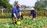 Gemeinde Tuy Loc in Yen Bai erhöht die Qualität der Kriterien zur Neugestaltung ländlicher Räume