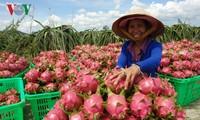 Investition zur Erhöhung des Exportvolumens von Gemüse und Früchten