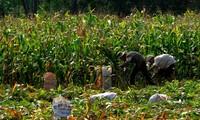 ให้การช่วยเหลือเกษตรกรในการสร้างสรรค์ชนบทใหม่ในจังหวัดด่งนาย