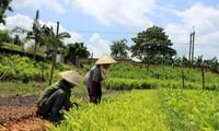 ยกระดับประสิทธิภาพของการบริหารและการใช้ที่ดินฟาร์มเกษตรและพื้นที่ปลูกป่า