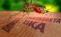 หญิงตั้งครรภ์ที่เดินทางกลับประเทศจากเขตที่มีการแพร่ระบาดของเชื้อไวรัสซิก้าต้องตรวจเลือด