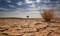 ธนาคารโลกสนับสนุนเวียดนามรับมือการเปลี่ยนแปลงของสภาพภูมิอากาศ