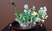 ดอกไม้แห่งความโชคดีคนเวียดนามใช้ตกแต่งในบ้านช่วงตรุษเต๊ตตามประเพณี (บทที่ 2)