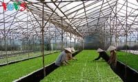 จังหวัดห่านามพัฒนาการเกษตรที่ใช้เทคโนโลยีชั้นสูง