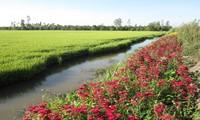 """รูปแบบ """"การปลูกดอกไม้บนคันนา""""มีส่วนร่วมพัฒนาการเกษตรอย่างยั่งยืน"""
