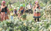 Vietnam- an example in poverty reduction