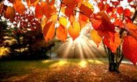 Thu Cuối- The Last Autumn
