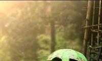 Nhớ mưa – Miss the rain
