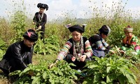 Ha Giang, GFS sign herbal medicine cooperative program