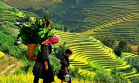 Stunning beauty of north western region's paddy fields