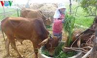 Sustainable livestock farming in Ninh Thuan