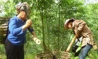New rural development in Mong Son
