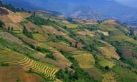 Terraced paddy fields in Chieng An