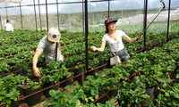 Tours of high-tech agriculture in Da Lat