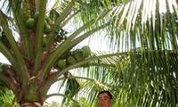Do Hieu Liem - a successful farmer in Tien Giang