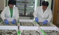 US spider silk-based fibre to invest in Vietnam