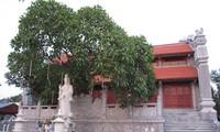 Cuong Xa- a hundred year-old pagoda in Hai Duong