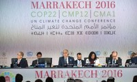 COP22: Turning words into action