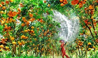 Lai Vung Mandarin Garden