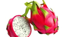 Australia agreed in principle the importation of fresh dragon fruits from Vietnam
