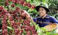 Vietnamese Coffee Day promotes coffee development
